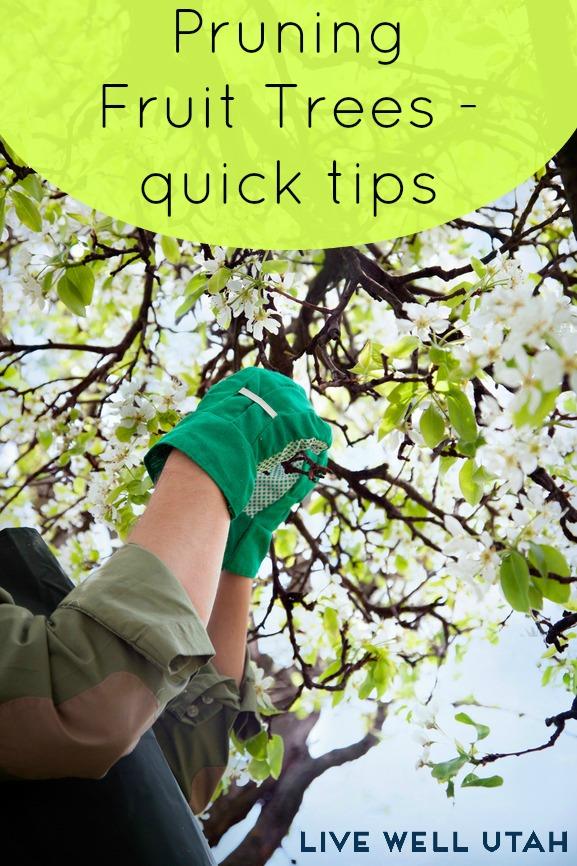 how to prune fruit trees - LiveWellUtah.org