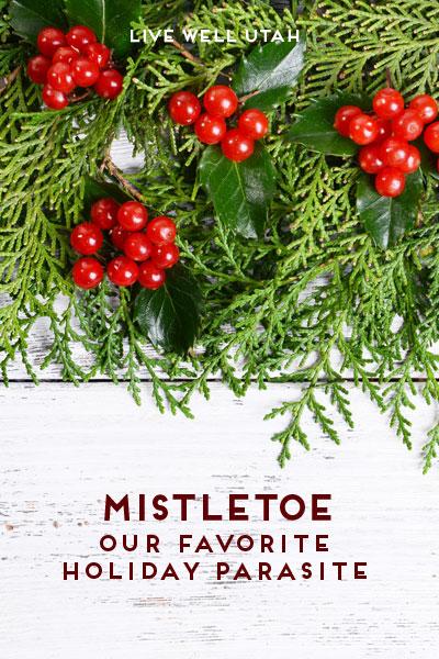 Mistletoe: Our Favorite Holiday Parasite | Live Well Utah