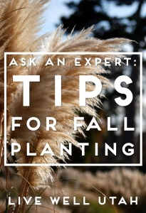 tips-for-fall-planting