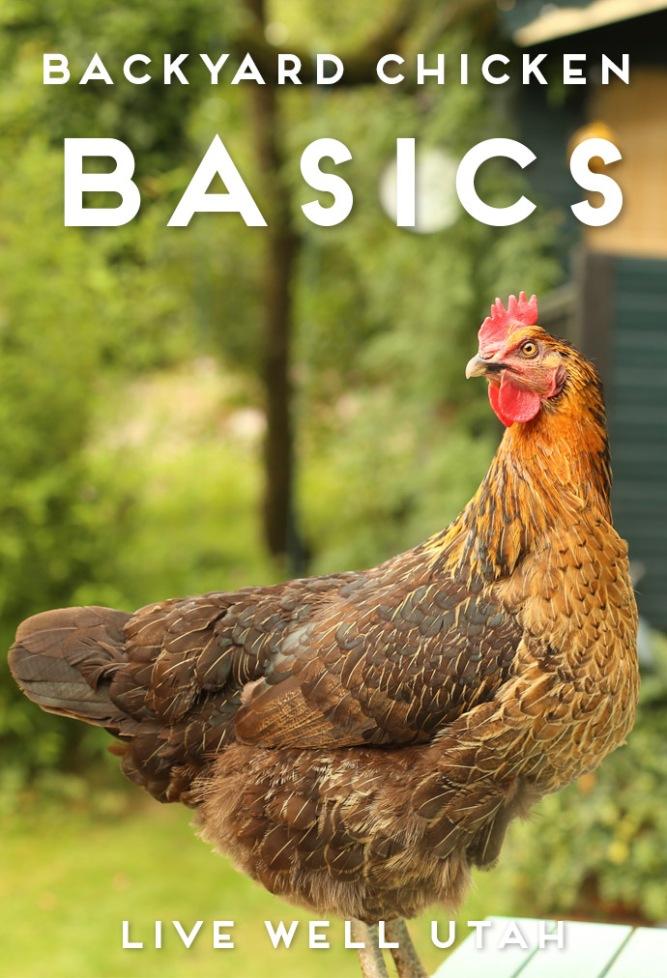 Backyard Chicken Basics
